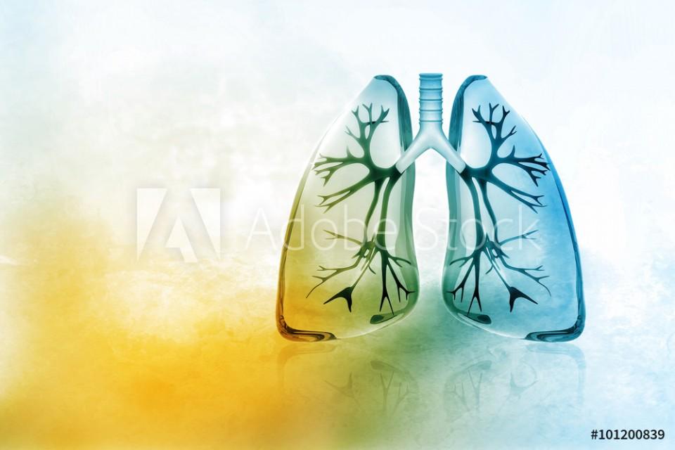 elif clarke - the breath psychologist